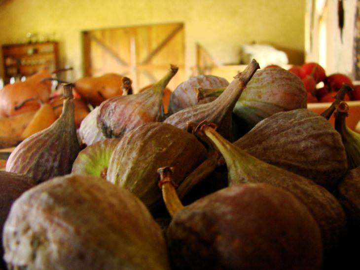figs-r-jpg