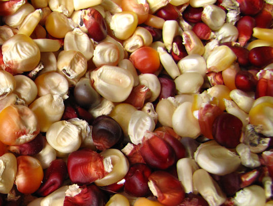 enaleni-multicoloured-kernels-res-jpg