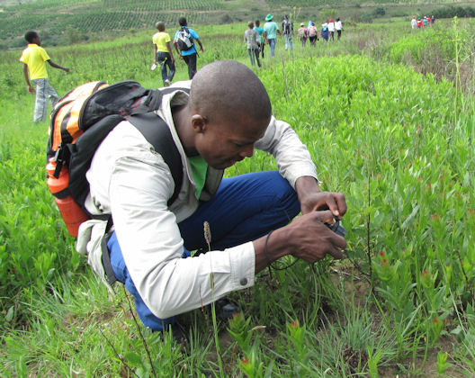 Nkulu photographing Acalypha RES