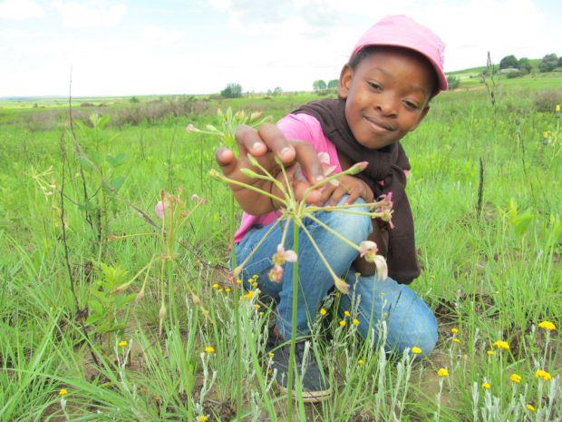 Samkelisiwe admires Pelargonium luridium by Nkululeko Mdladla RES.