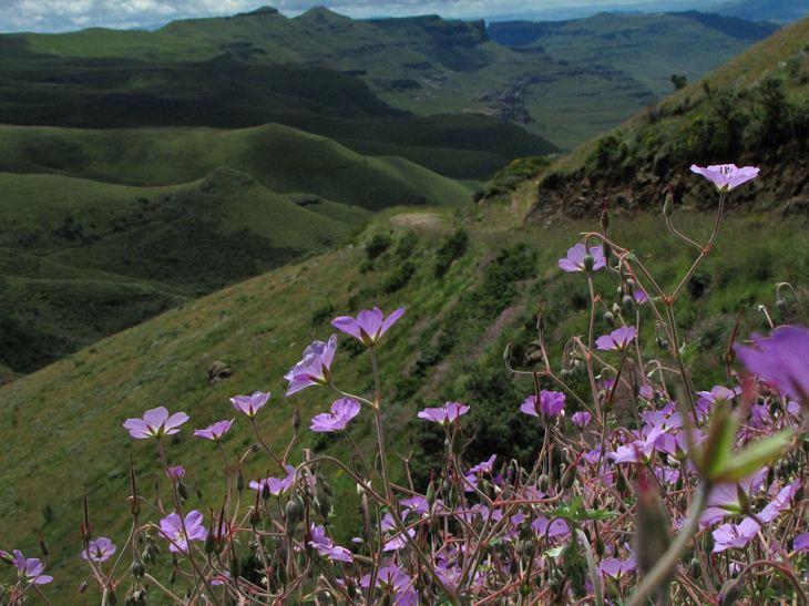 sani pass geranium pulchrum view res
