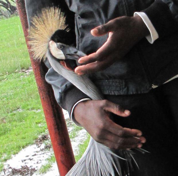 Nkulu hands and Boston