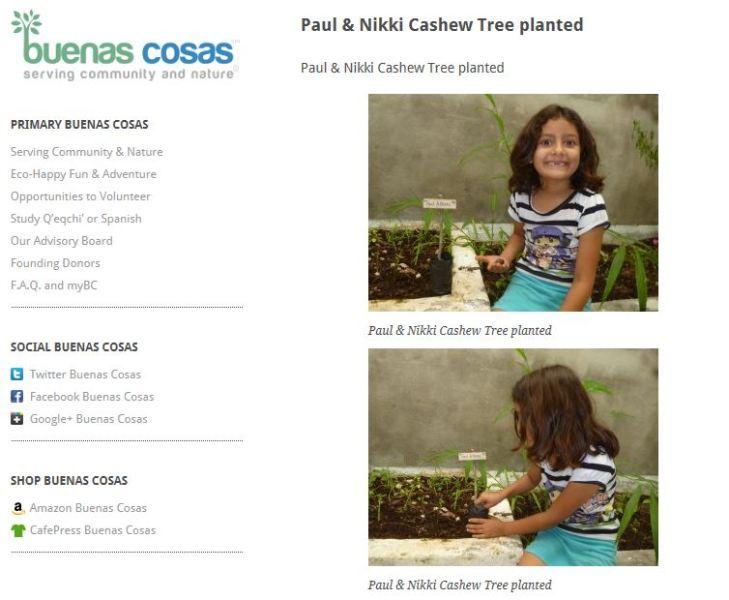 Cashew tree planted