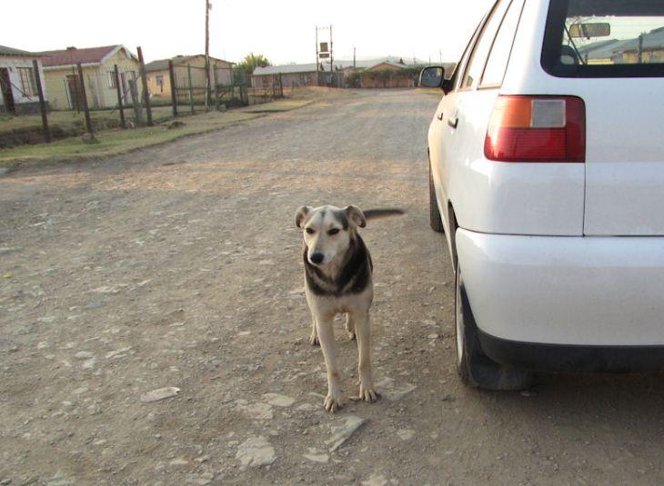 Zulu - cool dog