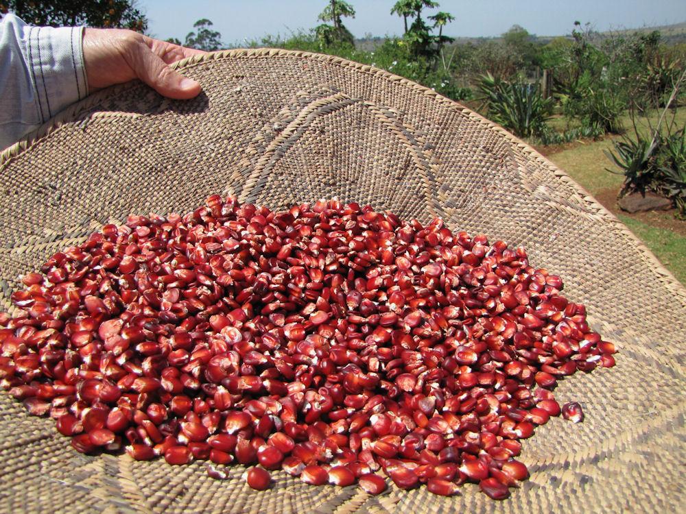 enaleni farm red maize