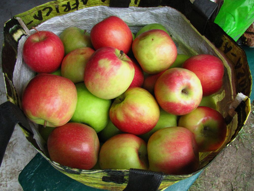 r apples