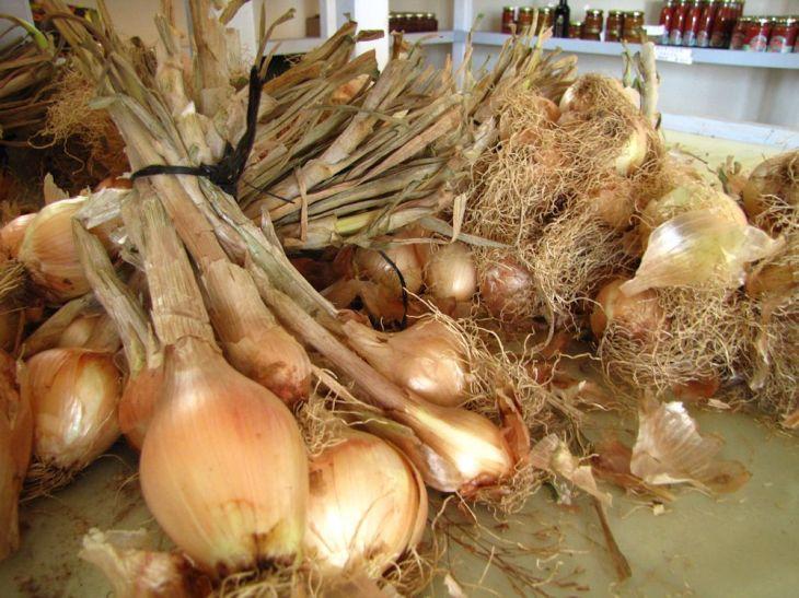 r onion bunch