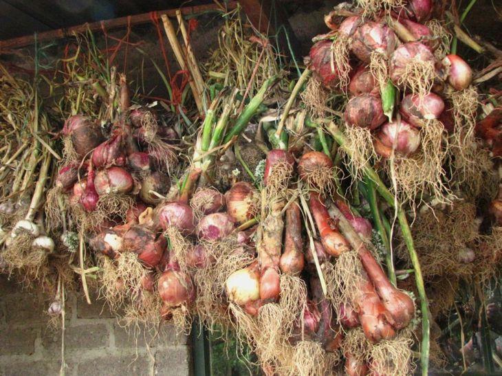 r onions