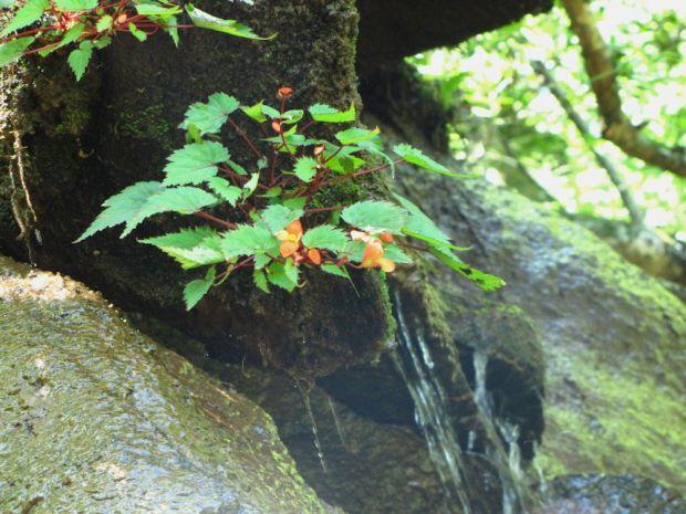 r Mpop Entle stream forest 325