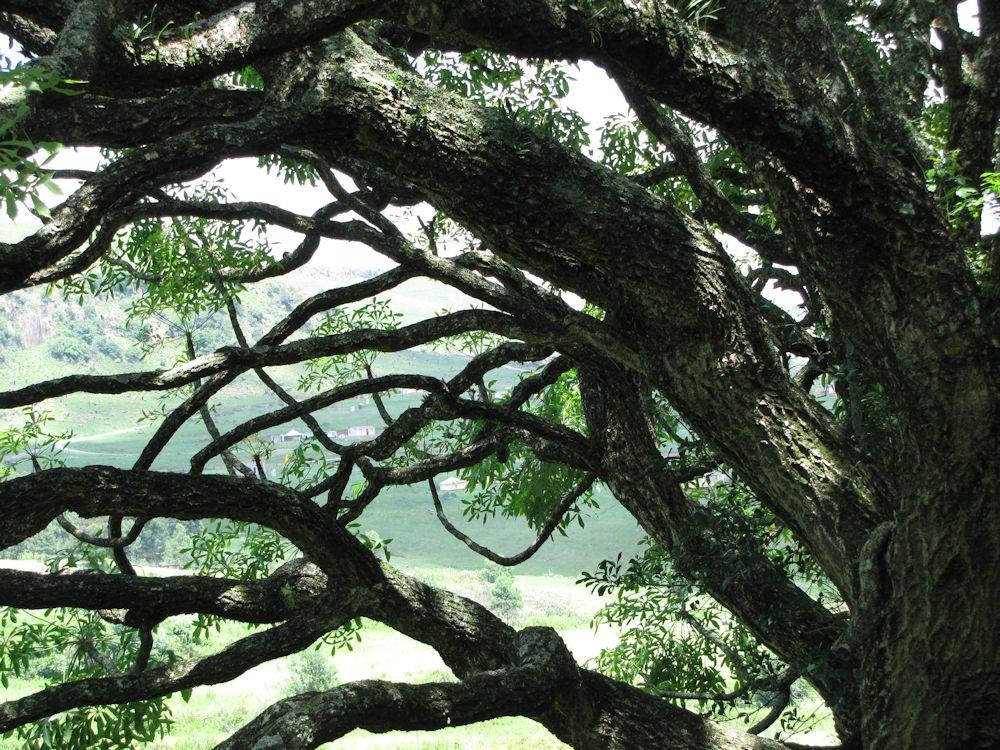r Mpop Entle stream forest 417