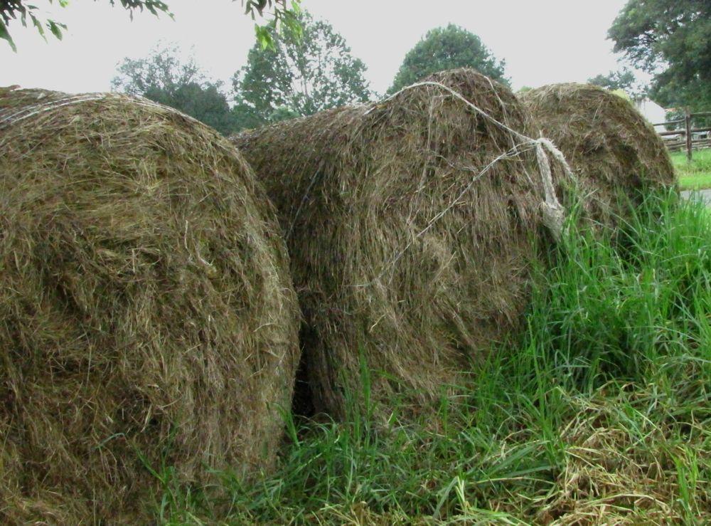r preston farm 041