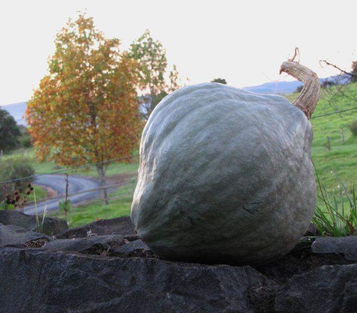 r stone wall  pumpkin 010
