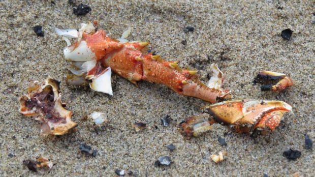 r crayfish