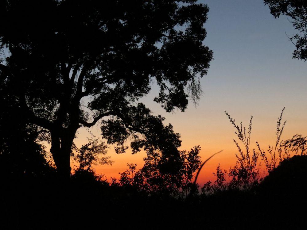 r sunrise prunus 046