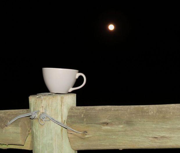 r teacup moon 011