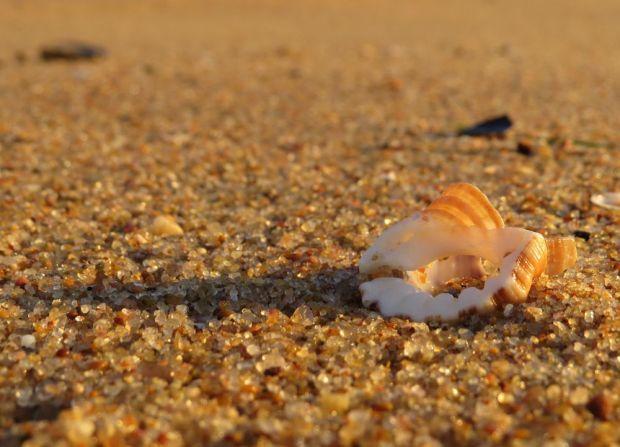 r beach shell