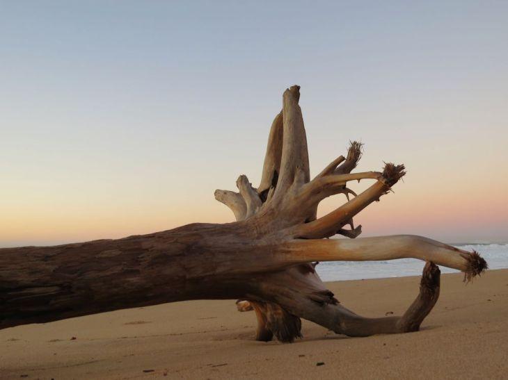 r driftwood
