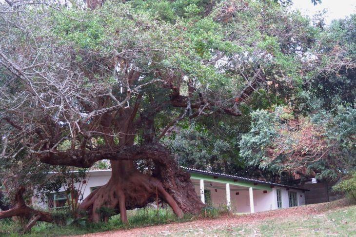 r fig tree lane pennington 303