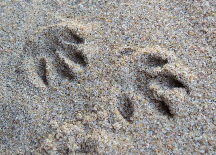 r mongoose prints