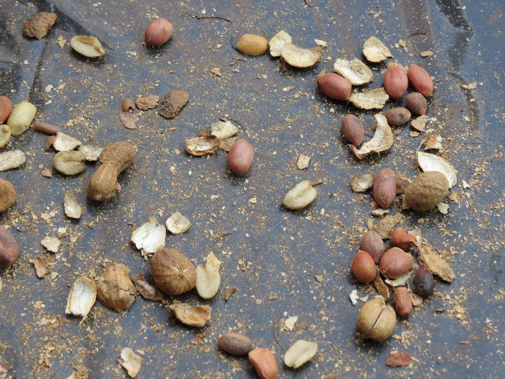 r peanuts