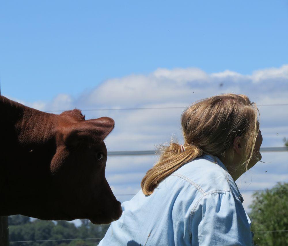 r tatsfield farm 047
