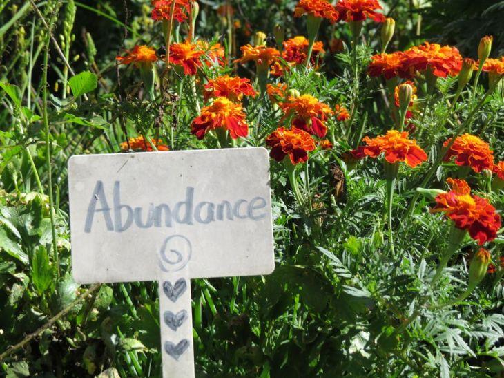 r carol abundance