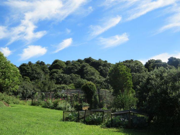 r carol garden forest
