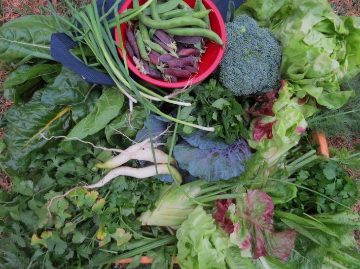 r winter garden harvest