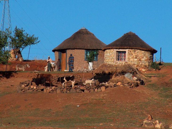 r basotho homestead with livestock