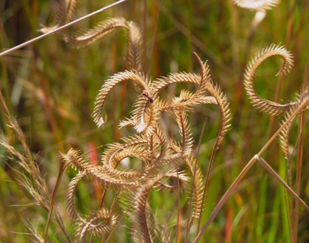 r twisted grass