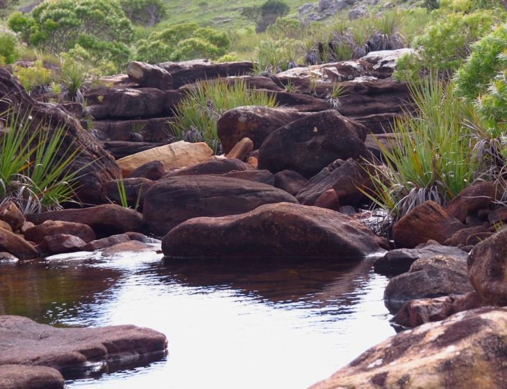 r wildcoast stream
