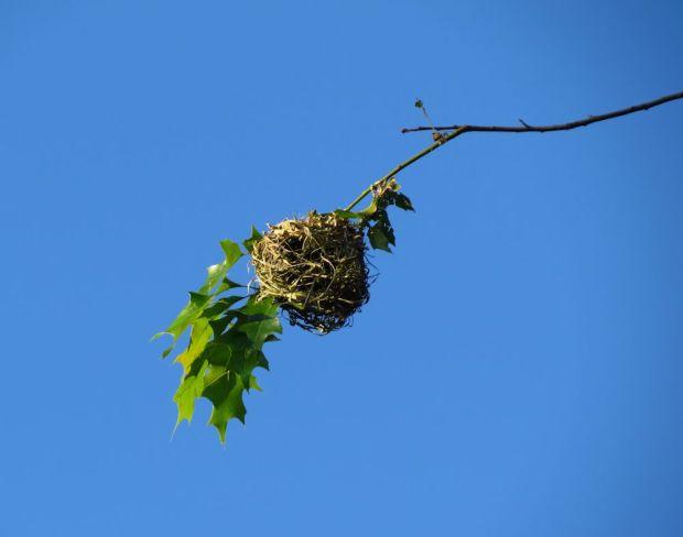 r bird nest branch