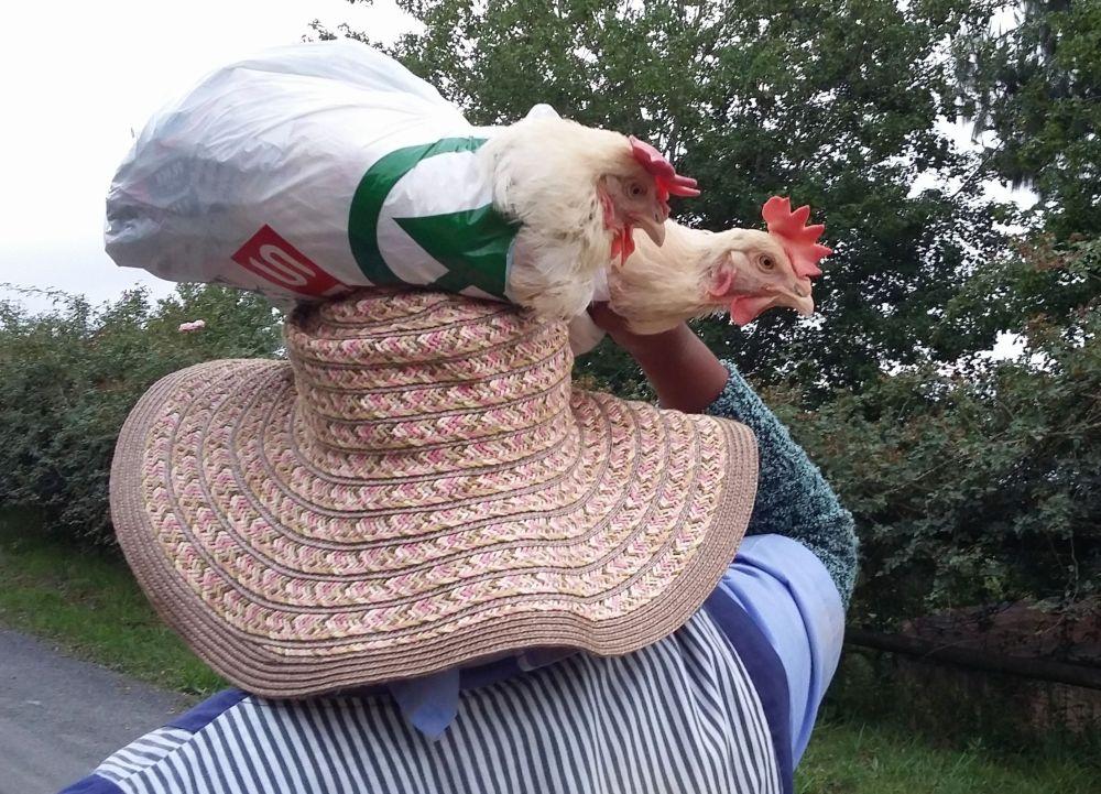 elizabeth and chickens