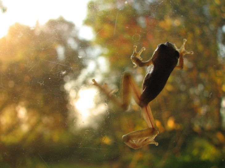 r window frog 2