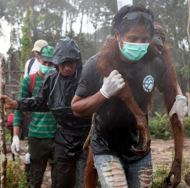PEOPLE-ONLY-Orangutan-Boon-Mee (1)