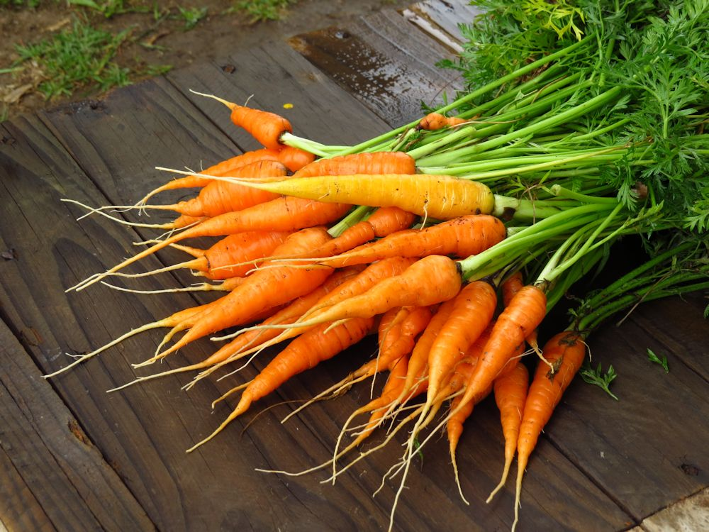r bunch carrots