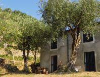 house-in-vineyard-olive-tree cinque terre