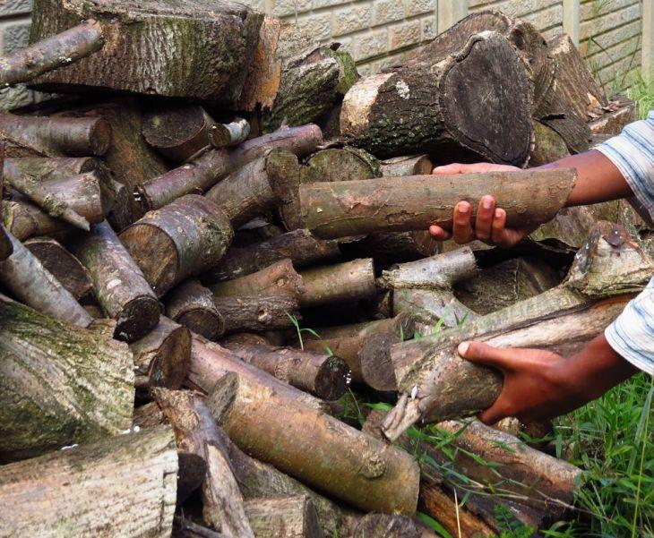 r IMG_5140 pile of logs