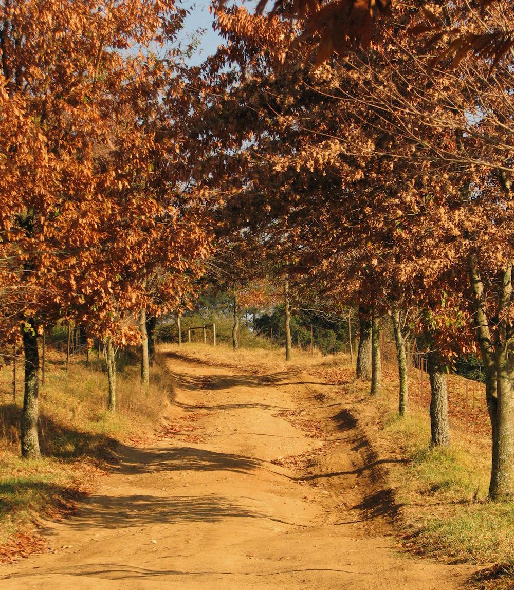 r autumn farm road