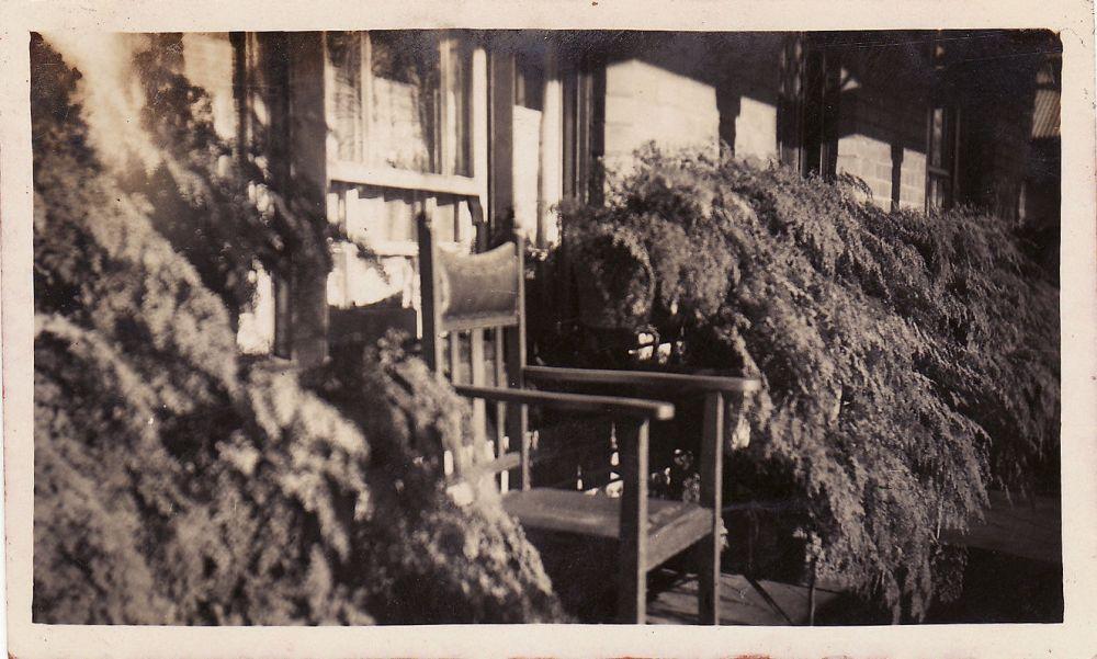 Gran veranda ferns adj