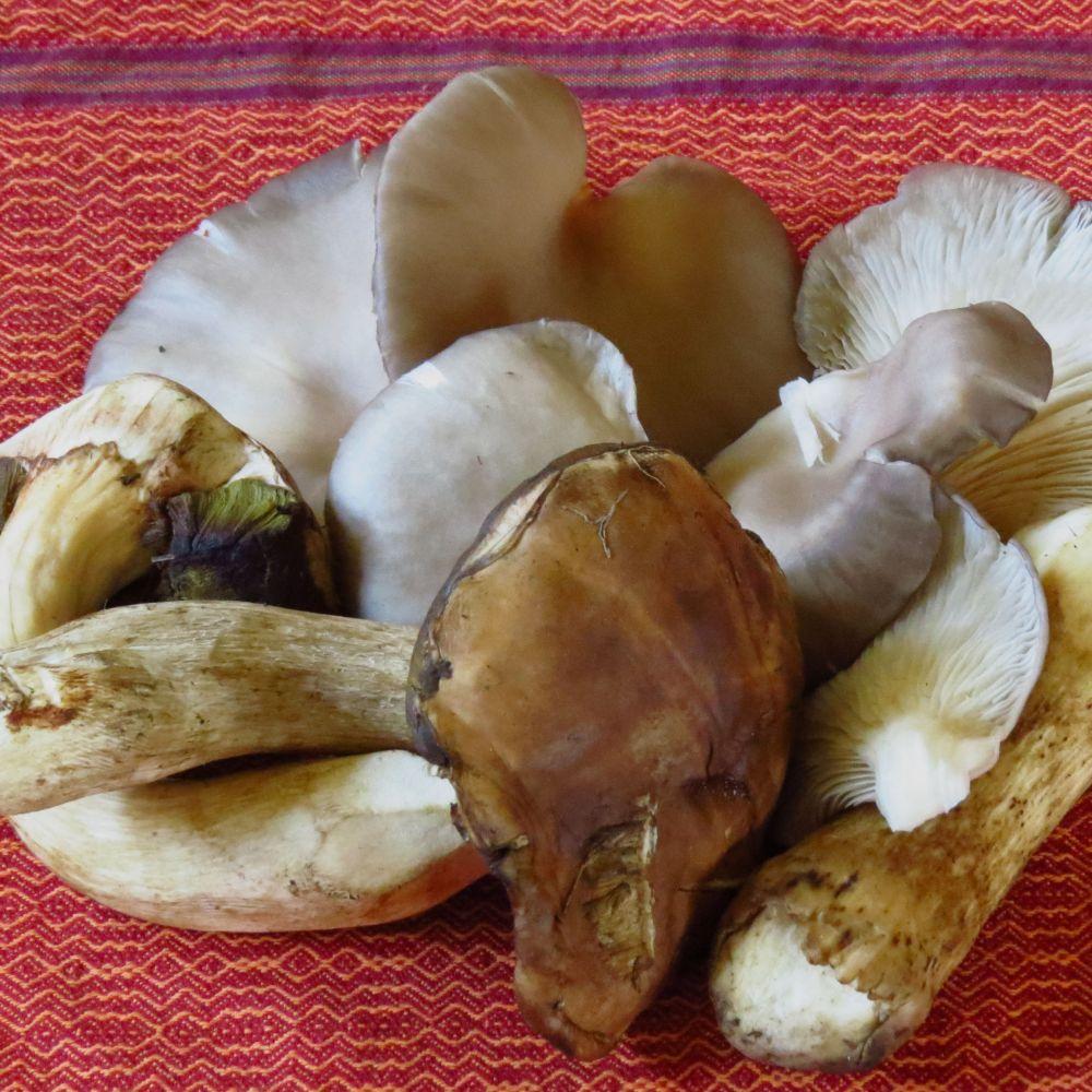boletus and oyster mushrooms