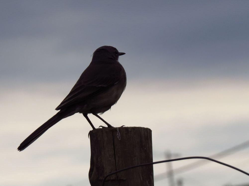 a Mpop bird on pole