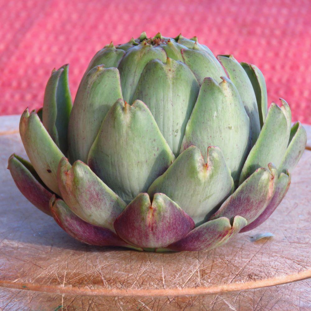 sq artichoke