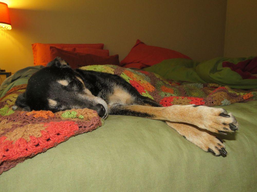 a Dizzy last nap