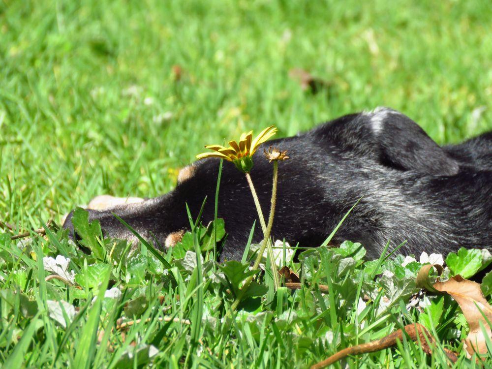 a dizzy daisy grass
