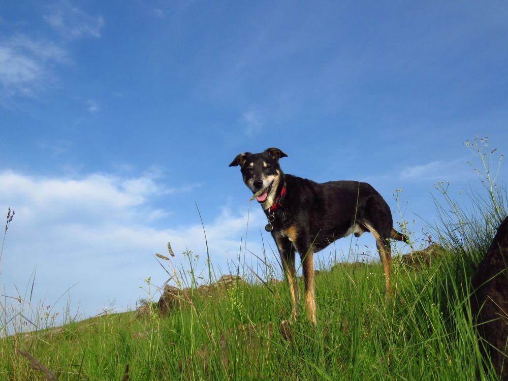 dizzy 3 legs grassland summer