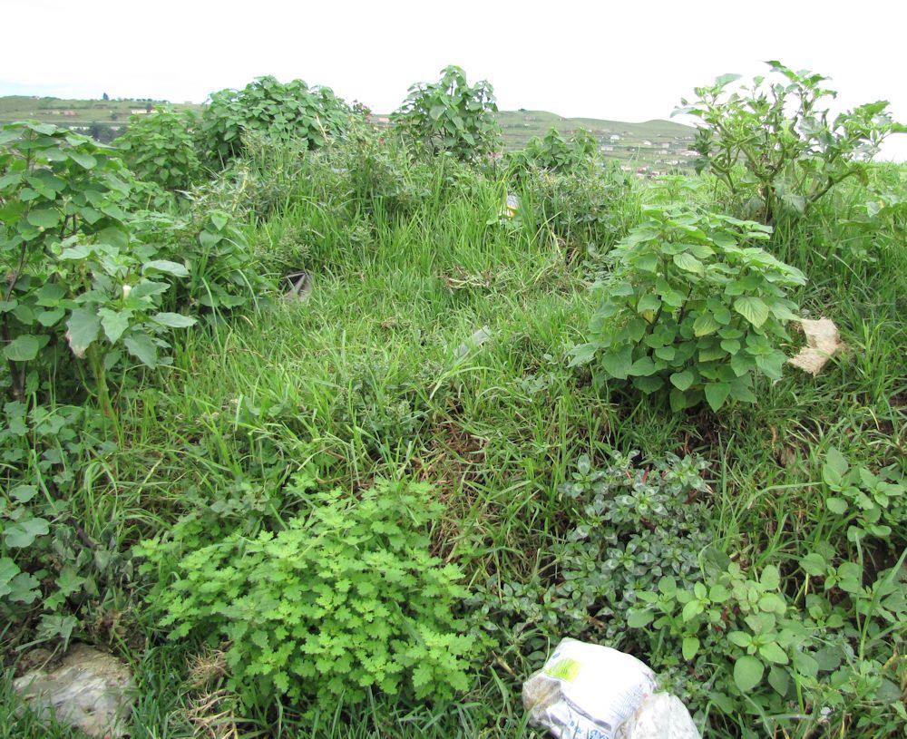 r Mpop gardens weeds