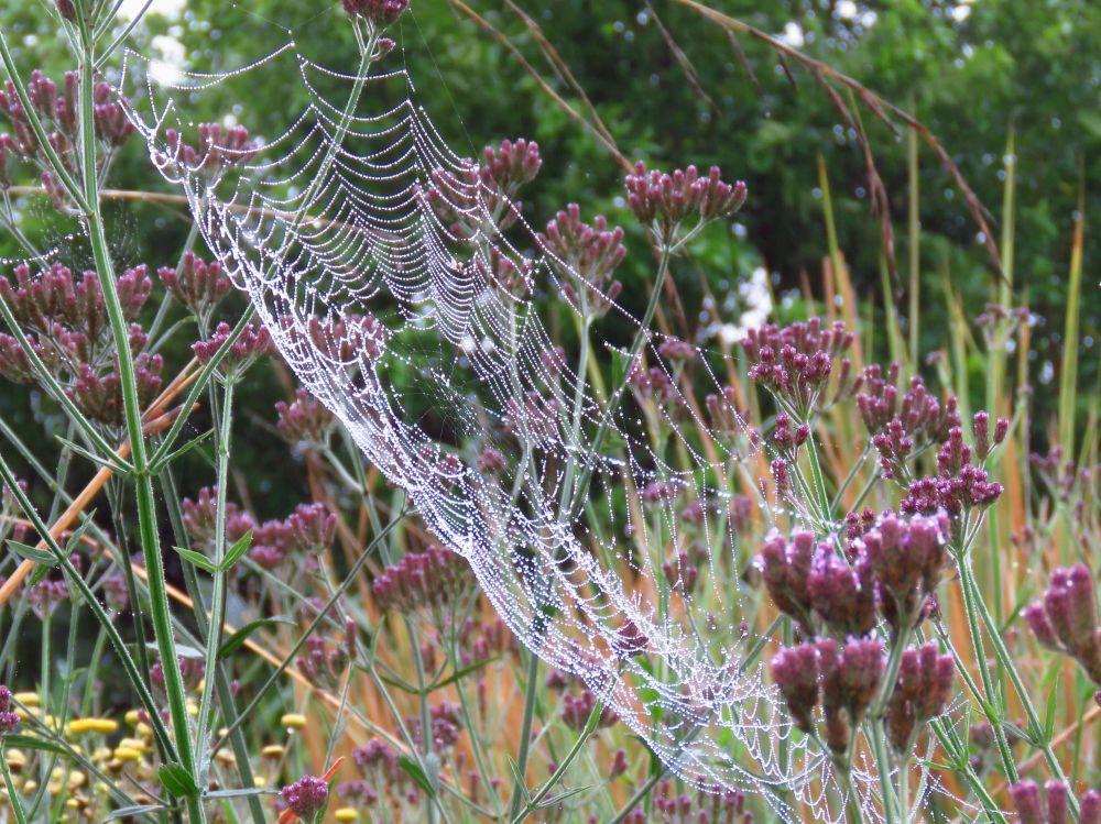 a web dew